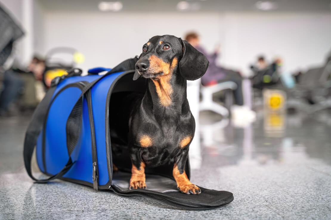 Dog in Carrier at Airport